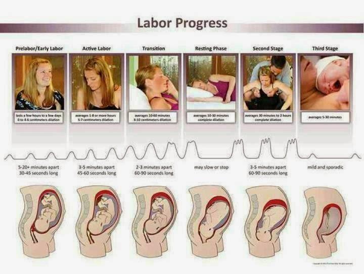 Resultado de imagem para fases do parto